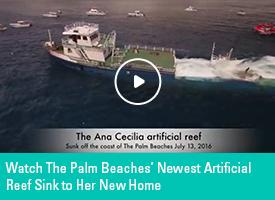 FeaturedVideo-AnaCecilia-275x200
